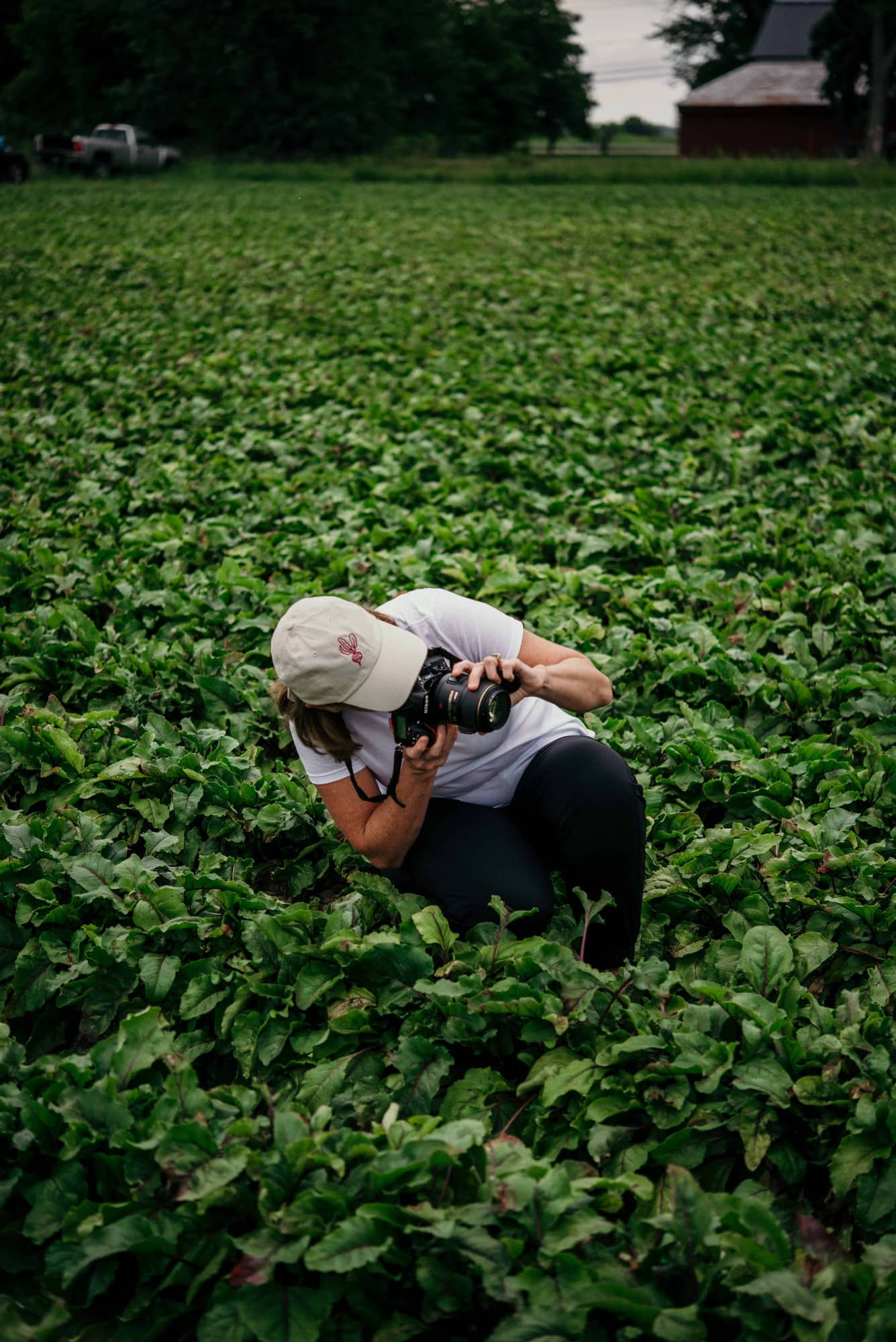 Photographer taking a photo in the beet field at Love Beets farm in New York
