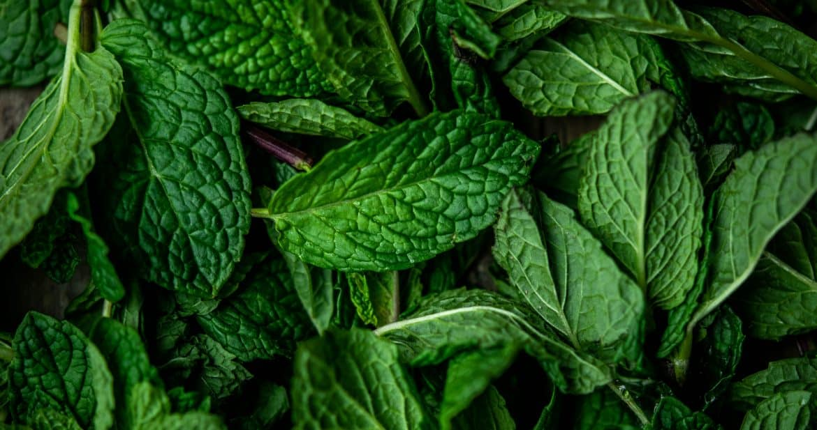 Overhead view of macro photography of fresh mint leaves
