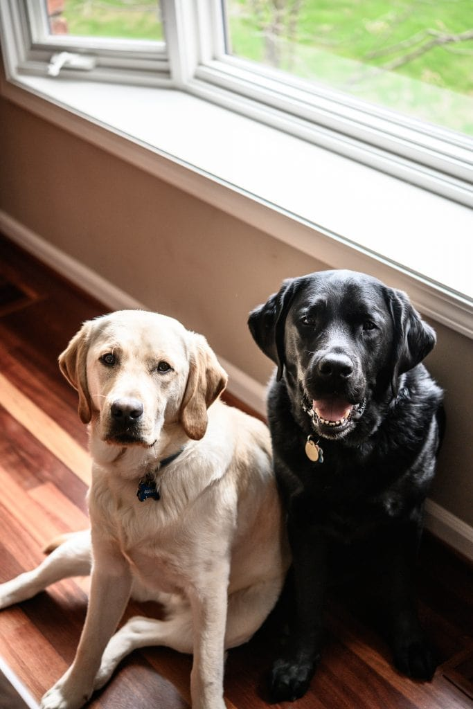 A yellow lab and black lab sitting next to each other in kitchen
