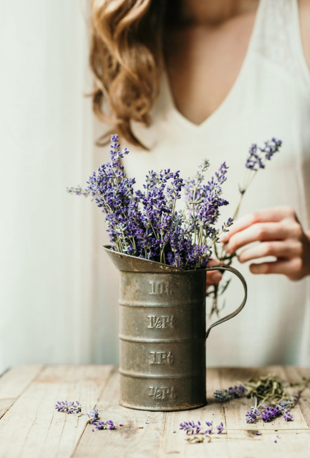 Fresh lavender in a tin pitcher with a person behind it
