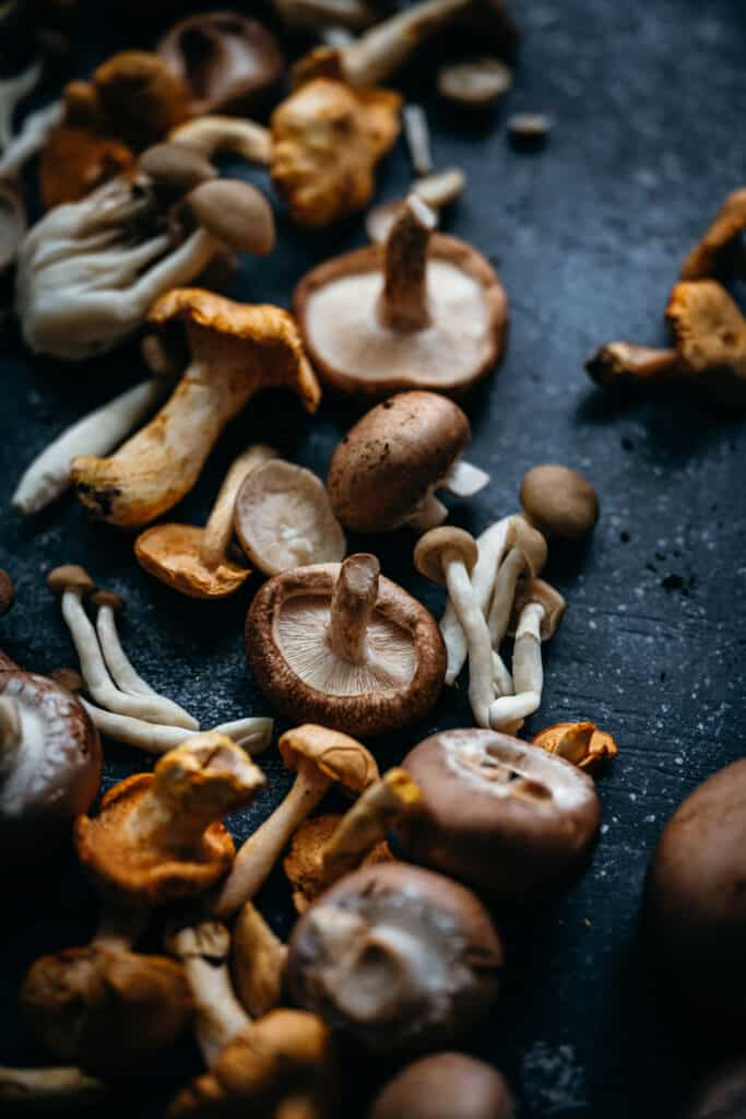 close up of fresh wild mushrooms on a dark blue background